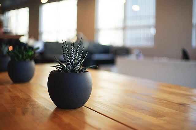 plant-1081856_640