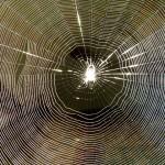 意外に吉夢!?夢占いにおいて蜘蛛の意味5パターン